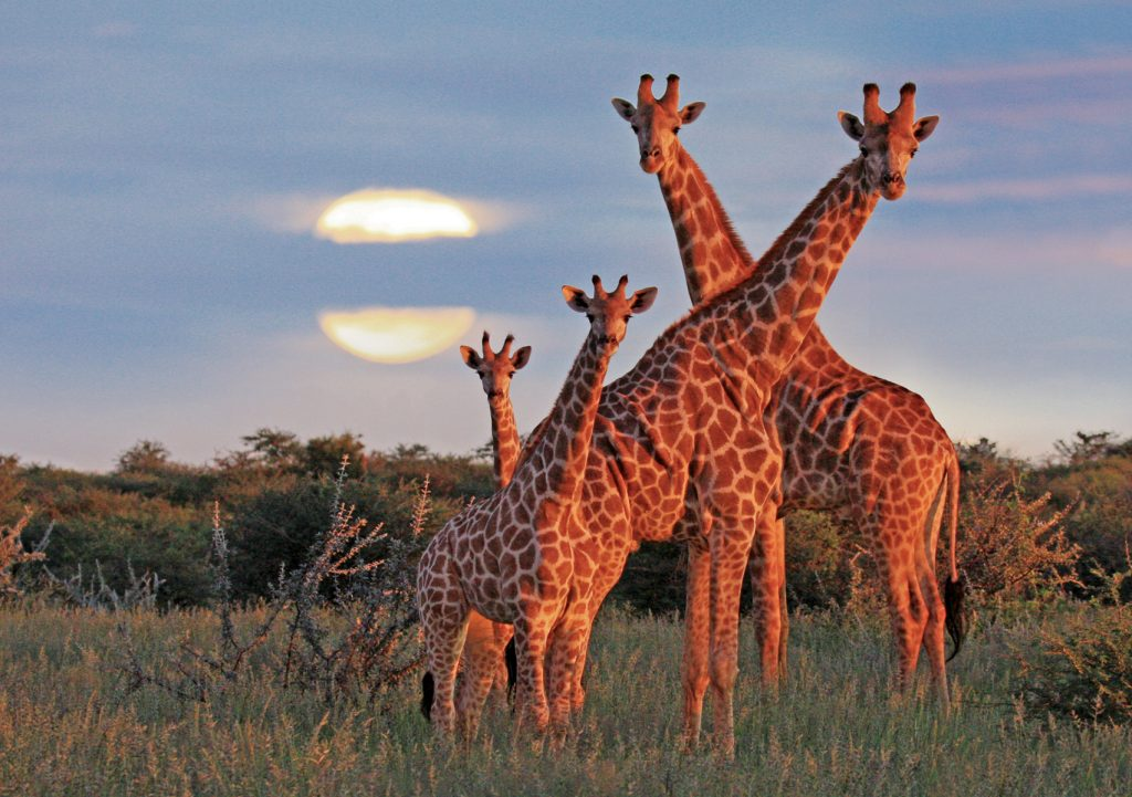 Guided Safari in Etosha