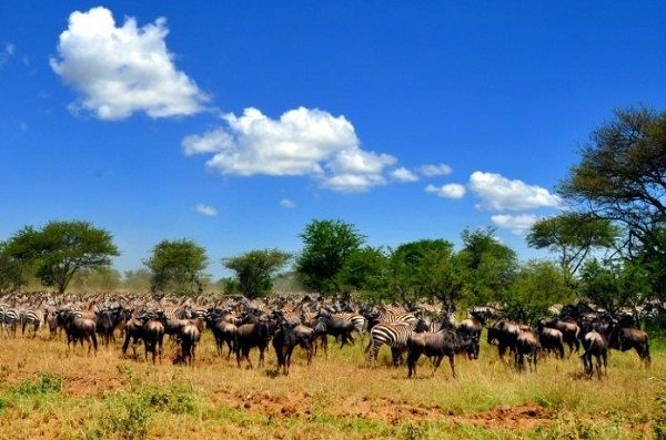 10 Day Wildebeest Migration Camping Safari