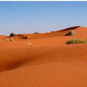 9 Day Kalahari Migration Safari