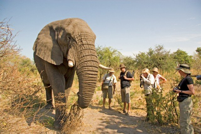 Elephant Sanctuary Tours