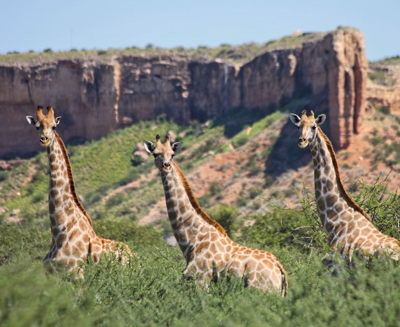 9 Day Namibian Wonders Self Drive from Windhoek
