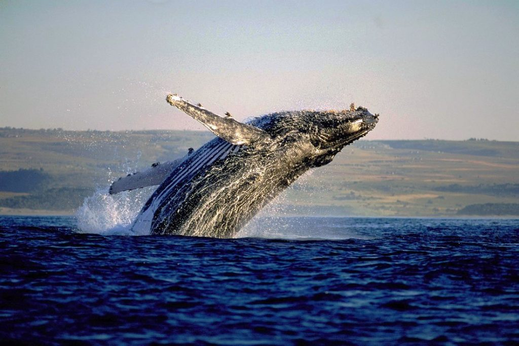 Full Day Whale Route Tours
