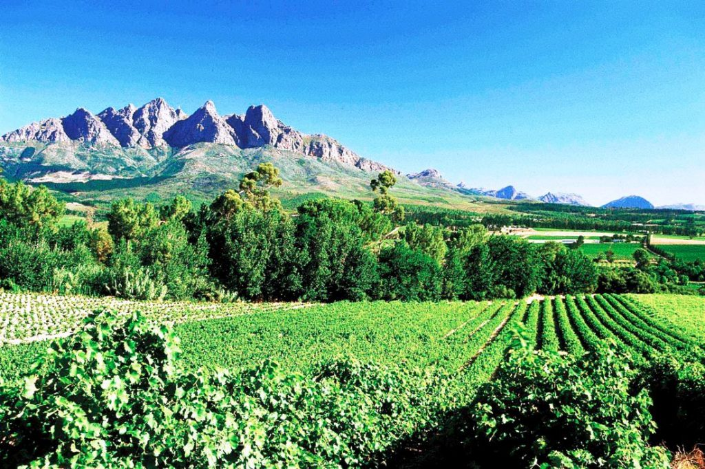 Wine Route Full Day Tours