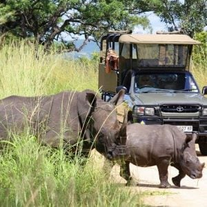 7 Day Kruger and Zululand Private Tour