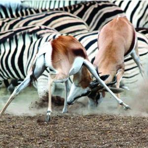 13 Days Wildlife & Deserts