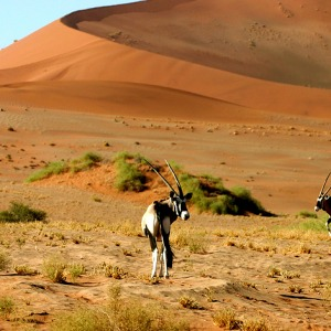 3 Days Sossusvlei Shuttle Tours