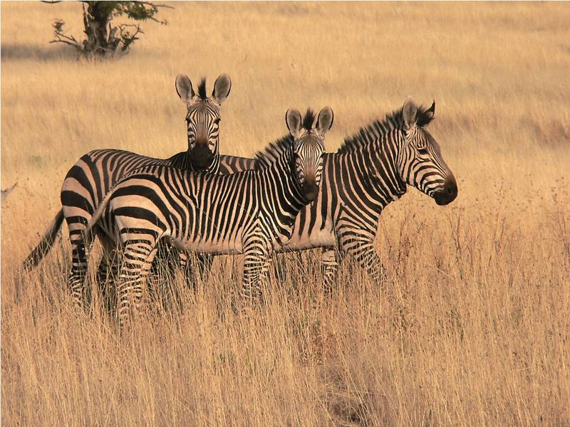 7 Day Northern Namibia Group Tour