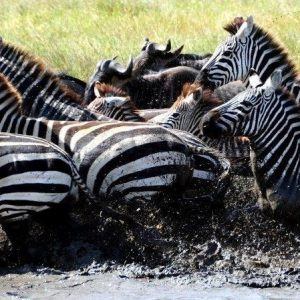 7 Day Big Migration Camping Safari