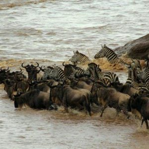 12 Day Best of Tanzania & Kenya