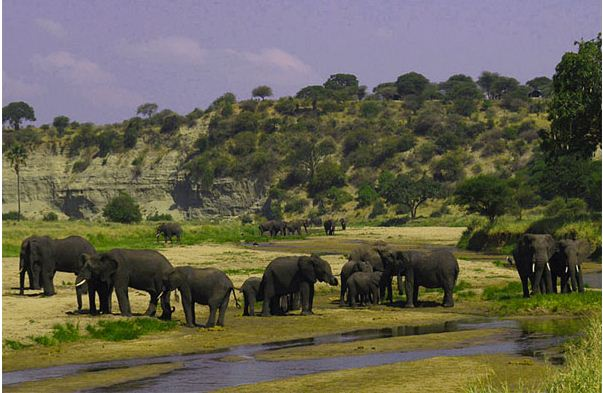 12 Day East African Highlights Camping Safari