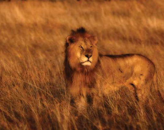 7 Day Kruger Park & Kingdoms