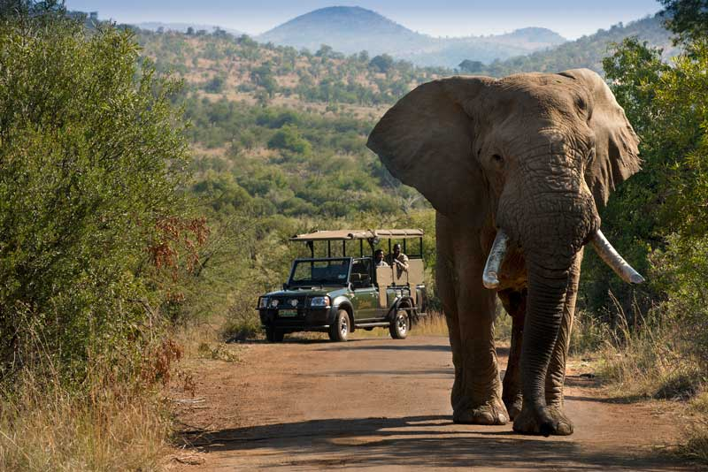 Open Vehicle Game Drive in Pilanesberg