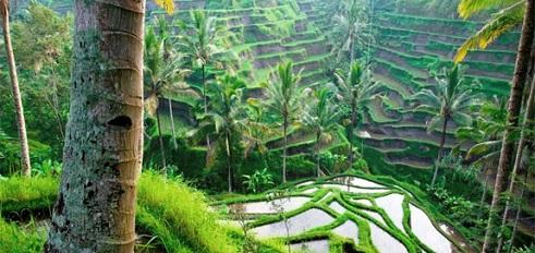 Bali holidays with Getaway Africa