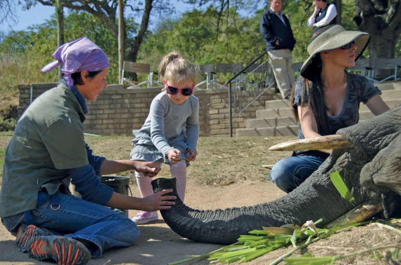 4 Days Kruger Safari & Elephant Sanctuary Tour