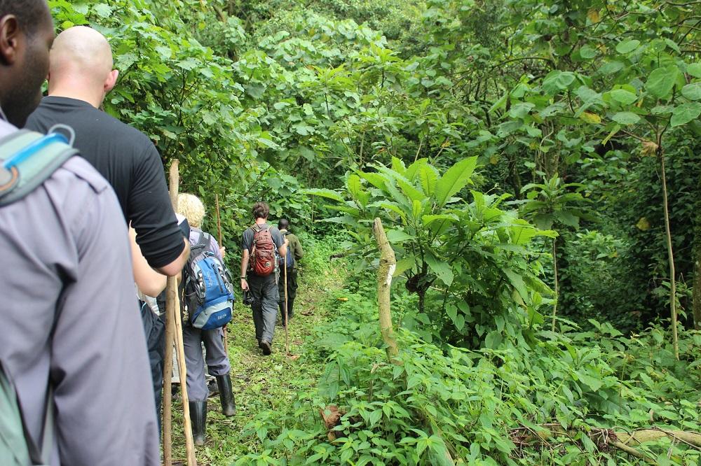 14 Day Masai Mara & Gorillas Tour from Nairobi