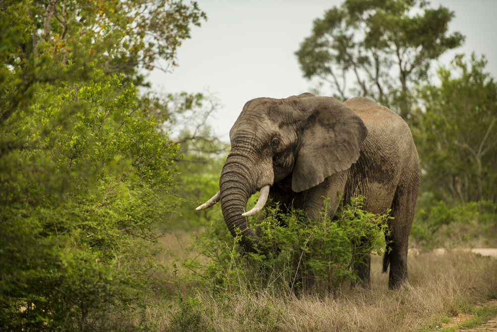 6 Day Maun to Victoria Falls Overland Tour