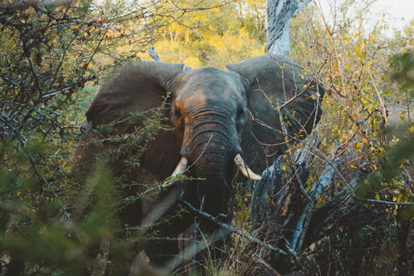 12 Day South African Explorer Small Group Tour