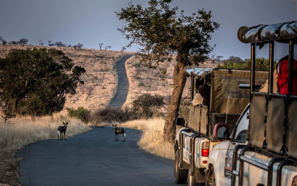 Kruger and Zululand Private Tour