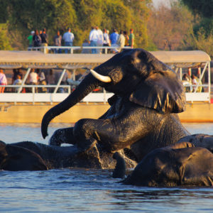 5 Day Chobe and Okavango Delta Safari