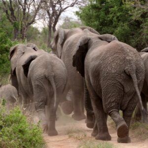 4 Day Wild & Scenic Kruger Tour