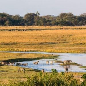 9 Days Botswana Highlights