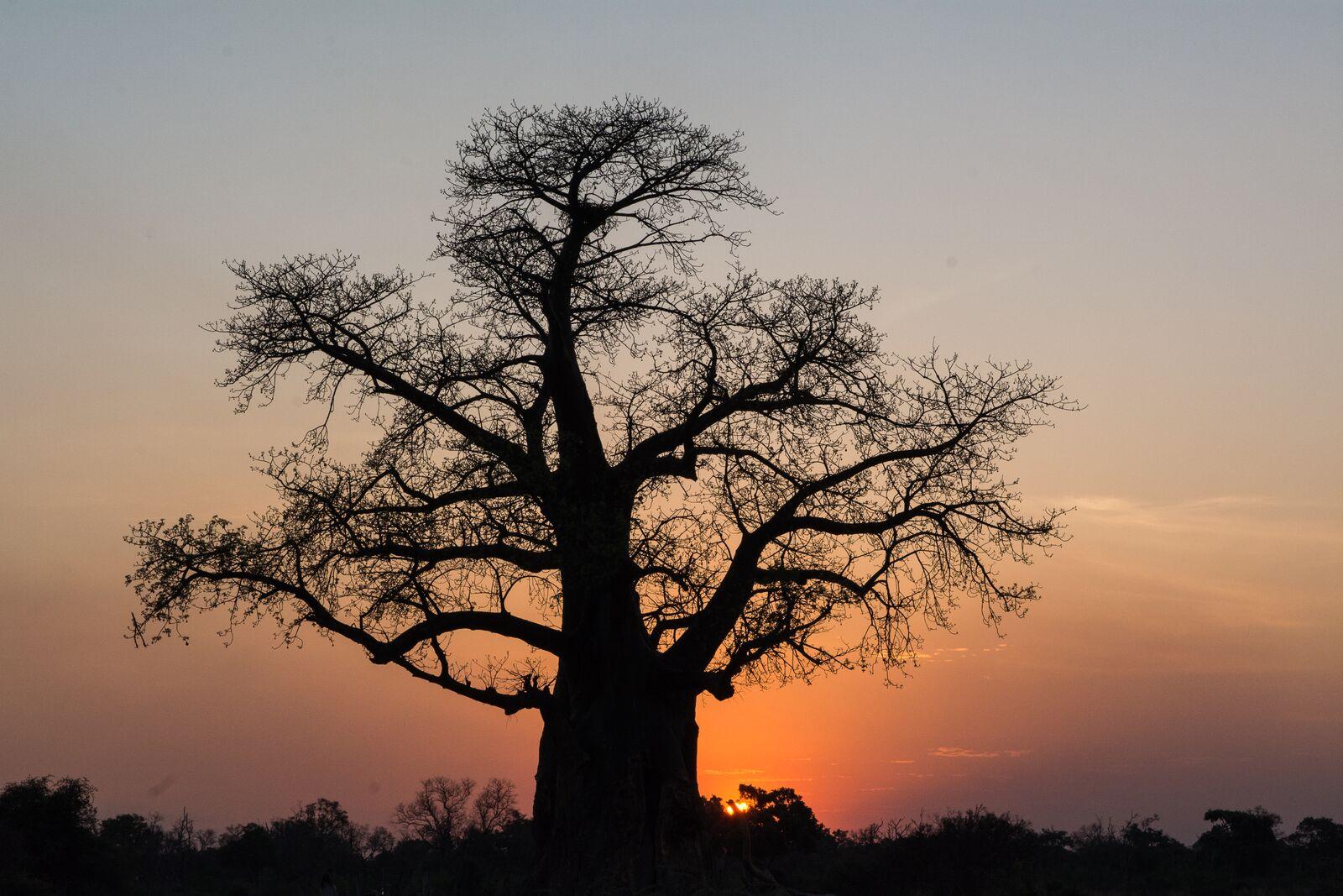 8 Days Botswana Highlights Tour