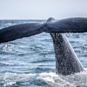 Full Day Whale Route Tour