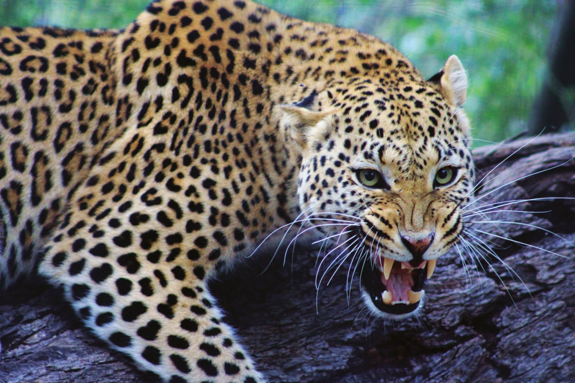 9 Day Highlights of Namibia Group Tour