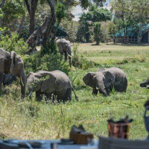 6 Day Masai Mara & Amboseli Safari