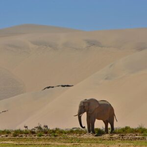 7 Day Faces of Skeleton Coast Self Drive Expedition