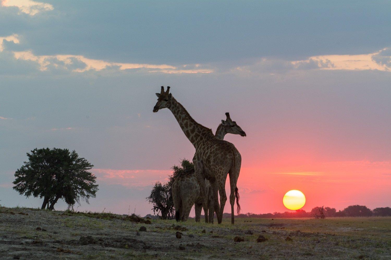 8 Day Captivating Zambezi Group Tour